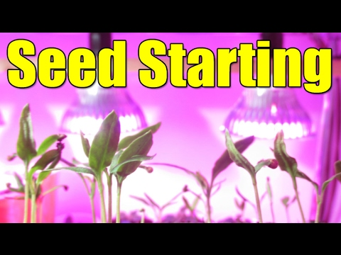 Planting Out 100 + Plant Starts In Under 5 Minutes!!!