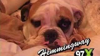 getlinkyoutube.com-Funny Moments Fall Out Boy :3