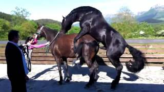 Horse Mating – Life of a Horses Part # 2 width=
