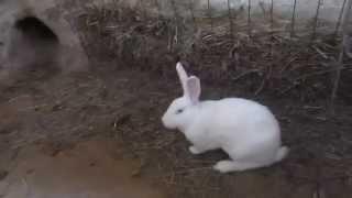 getlinkyoutube.com-кролики в яме 2015