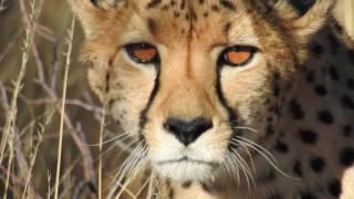 getlinkyoutube.com-NIKON P900:TESTED IN AFRICA
