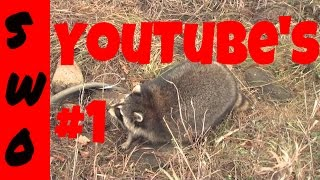 getlinkyoutube.com-Full length coon trapping video  THE FAST TRACK TO COON TRAPPING
