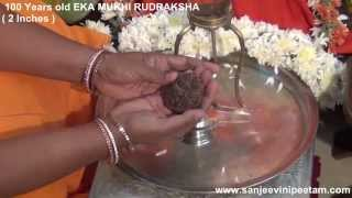 getlinkyoutube.com-100 YEARS OLD EKA MUKHI Rudraksha 26 7 2014 (2 Inches) Eswara Dandakam - Hanuman Mathaji
