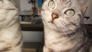 getlinkyoutube.com-猫:たまに甘えたりして過ごす楽しい母ちゃんの癒し ~変顔になったり必死になったり -Cat has a lot of fan with Mom