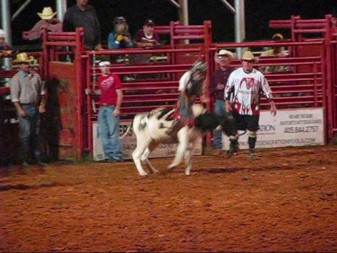 Jr. Rodeo calf, steer, and bullriding!