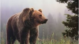 Documentary Bears 2017 HD - The Lord of Southern Alaska Paradise The Grizzly Bears