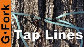 getlinkyoutube.com-Tapping Sugar Maple Trees With Tubing - GardenFork