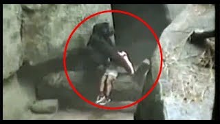 getlinkyoutube.com-Intenta no LLORAR  con este Video. Animales Héroes. Videos mas tiernos de 2016