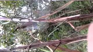 getlinkyoutube.com-bắt ong mật rừng