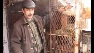 getlinkyoutube.com-Кролики это не только ценный мех... а способ заработать!