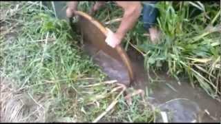 getlinkyoutube.com-Pescaria e uma grande surpresa