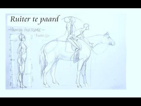 Hoe teken je een ruiter te paard - Anatomie