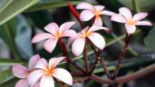 "getlinkyoutube.com-TAHITI...TRIO- KIKIRIRI.  ""  Valse..."""