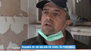 getlinkyoutube.com-Pagubă de un milion de euro, în porumbei