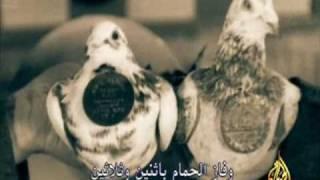 getlinkyoutube.com-الطيور المحاربة بالحرب العالمية 1