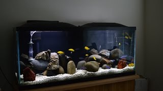 getlinkyoutube.com-African Cichlids | Mbuna Stripping | Demasoni & Yellow Labs | Water Change