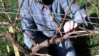 getlinkyoutube.com-Cane Pruning Wine Grapes
