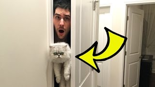 getlinkyoutube.com-HIDE THE CAT CHALLENGE!!!