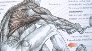 getlinkyoutube.com-Bodybuilding back exercises and anatomy