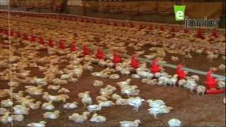 getlinkyoutube.com-Kidding Around Poultry Farm مزرعة الدواجن