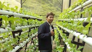 getlinkyoutube.com-Teknik Budidaya Sayuran Hidroponik