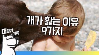 getlinkyoutube.com-강아지가 핥는 이유 9가지ㅣ대형견가족