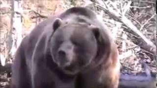 getlinkyoutube.com-【驚愕】【恐怖】ヒグマの怖さを体感 驚愕動画 HIGUMA
