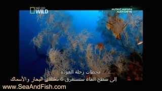 getlinkyoutube.com-الحنكليس أخطر ثعبان في البحر الأحمر والبحر المتوسط الحنكليس الشاقة المارينا