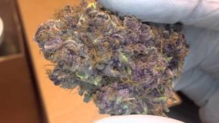 getlinkyoutube.com-Bud Shots of Blue Rhino, Double Purple Romulan, Green Crack, Berry White, and Chem 4
