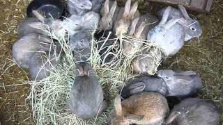 Охренеть можно всем смотреть! Кролики зажигают!