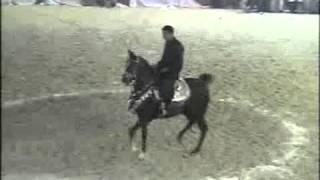 getlinkyoutube.com-رقص خيول عربية مهرجان البحيرة خيول غيرمسجلة_٠٨