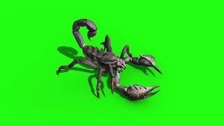 Green Screen Animal Scorpio Walk Attack - Footage PixelBoom