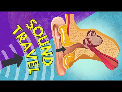 037 How Sound is Transferred to the Inner Ear
