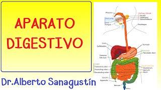 APARATO DIGESTIVO explicado FÁCIL: anatomía y fisiología