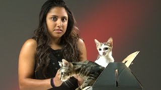 getlinkyoutube.com-People Who Hate Cats Meet Kittens
