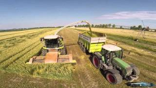 getlinkyoutube.com-Wheat Silage in Italy |Claas Jaguar 980 Dynamic Power | Fendt 936 | 820 | 939 | Turbostar 190-38