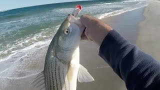 getlinkyoutube.com-Striped Bass Gone Crazy... IN THE WASH!!