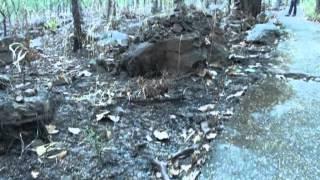 getlinkyoutube.com-วัดป่าอุดมคงคาคีรีเขต วัดหลวงปู่ผาง จิตฺตคุตฺโต อำเภอมัญจาคีรี จังหวัดขอนแก่น