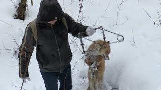 getlinkyoutube.com-АРБАЛЕТ ИЛИ ЛУК.  Что лучше для охоты?