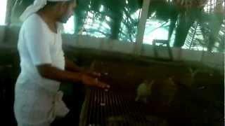 getlinkyoutube.com-rabit farm  മുയൽ വളർത്തൂ കുടുംബം പുലർത്തൂ Malayalam tutorial മലയാളം പഠനം