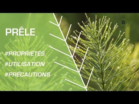Comment utiliser la prêle ? - Phytothérapie