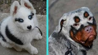 31 Unique Dogs With Unbelievable Fur Markings