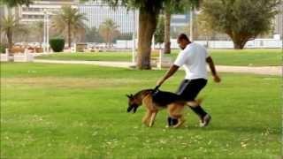 getlinkyoutube.com-تصوير بطيء ((هجوم الكلب)) !!!