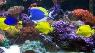 getlinkyoutube.com-P&P Tropical Fish - Beautiful Salt Water Fish Tank Marine Aquarium with Live Rock