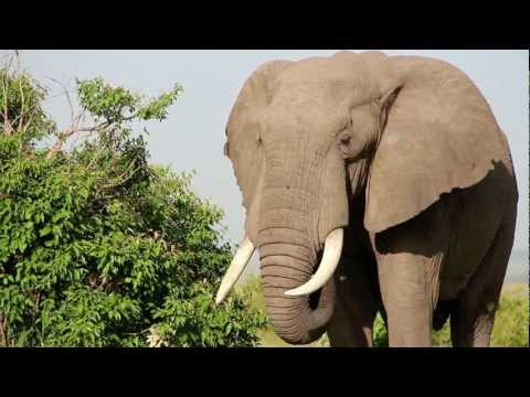 Wildlife Safari of Kenya (Africa) - Baba Yetu