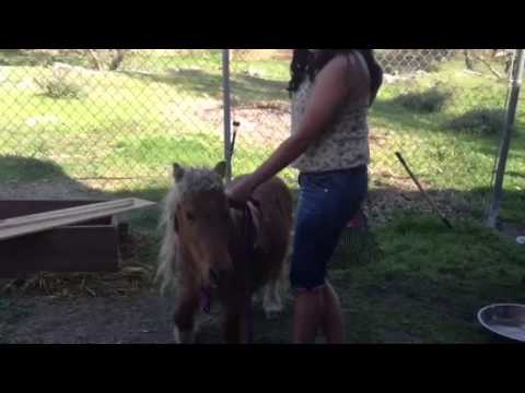 Wild Pony Ride -LFHagMCQrQ8