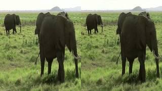 getlinkyoutube.com-KENIA 3D (kenya) 2012