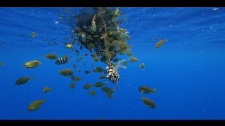 getlinkyoutube.com-The Lure of Flotsam   Rick Rosenthal & Pew