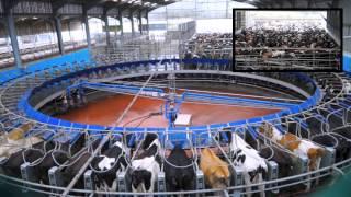 getlinkyoutube.com-70 Point De-Laval Rotary Milking Parlour. Glenapp Farm Ayrshire.DairyCo.