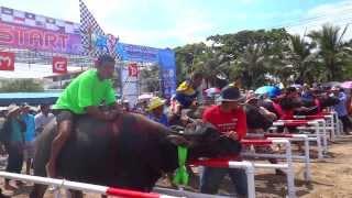 getlinkyoutube.com-วิ่งควาย ชลบุรี 2556 .. 4